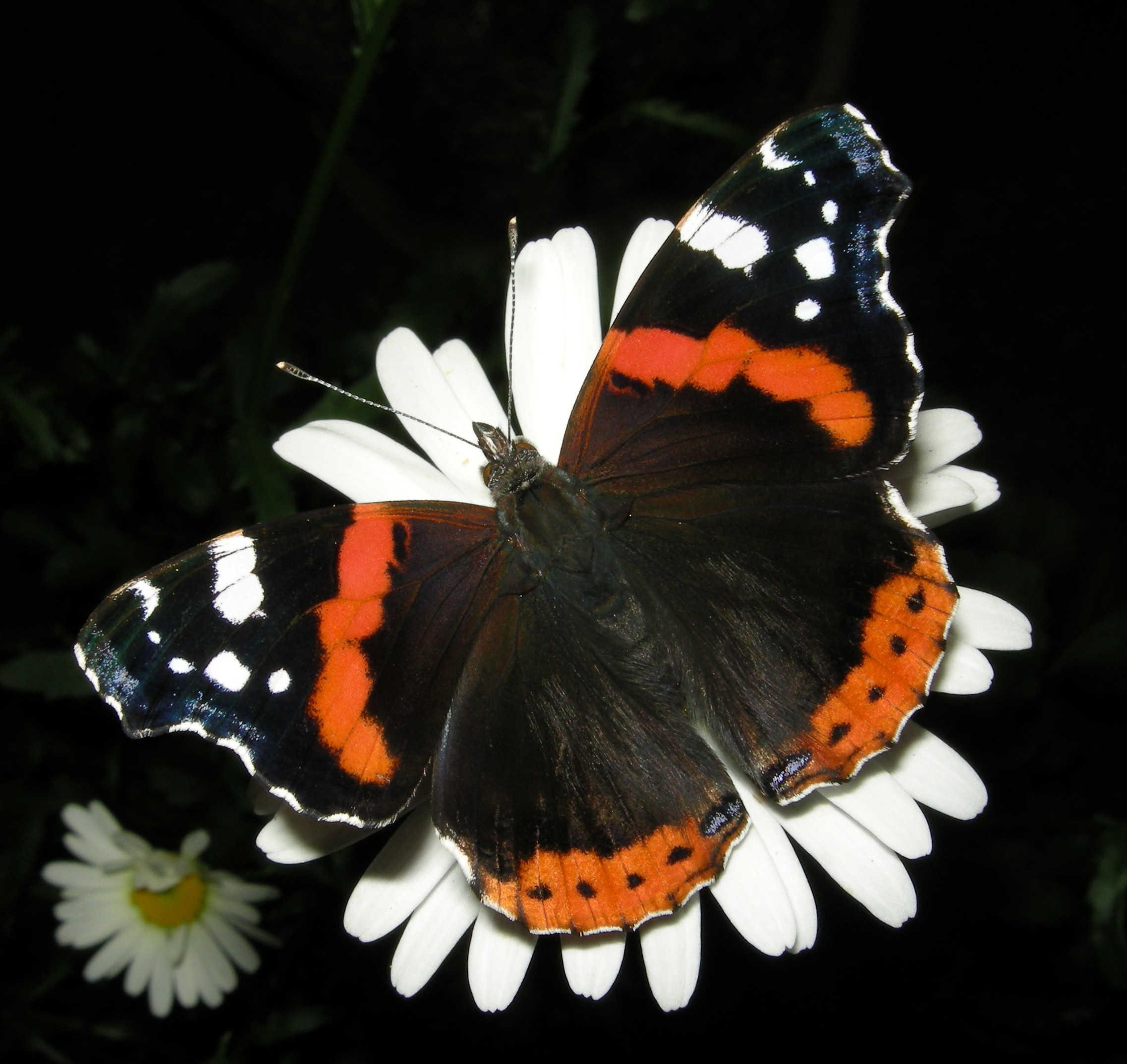 Это создал Бог - Бабочки - часть 2