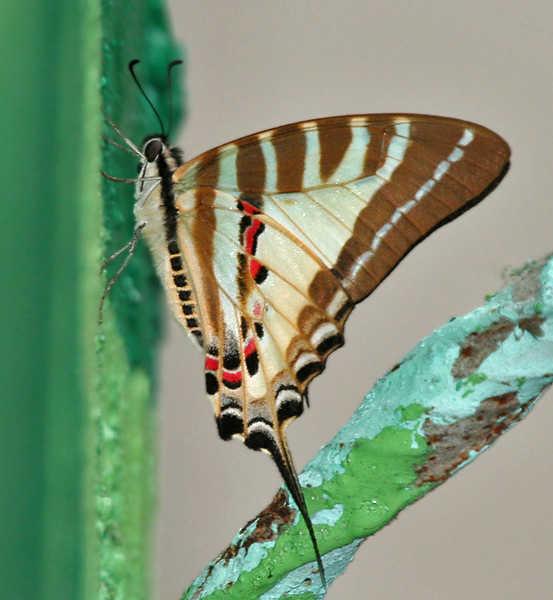 Это создал Бог - Бабочки - часть 3