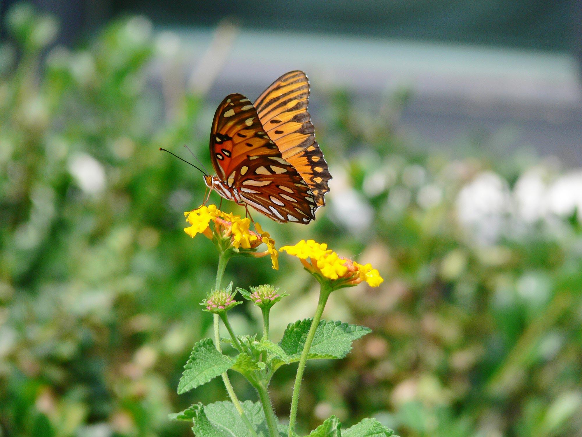 Это создал Бог - Бабочки - часть 1