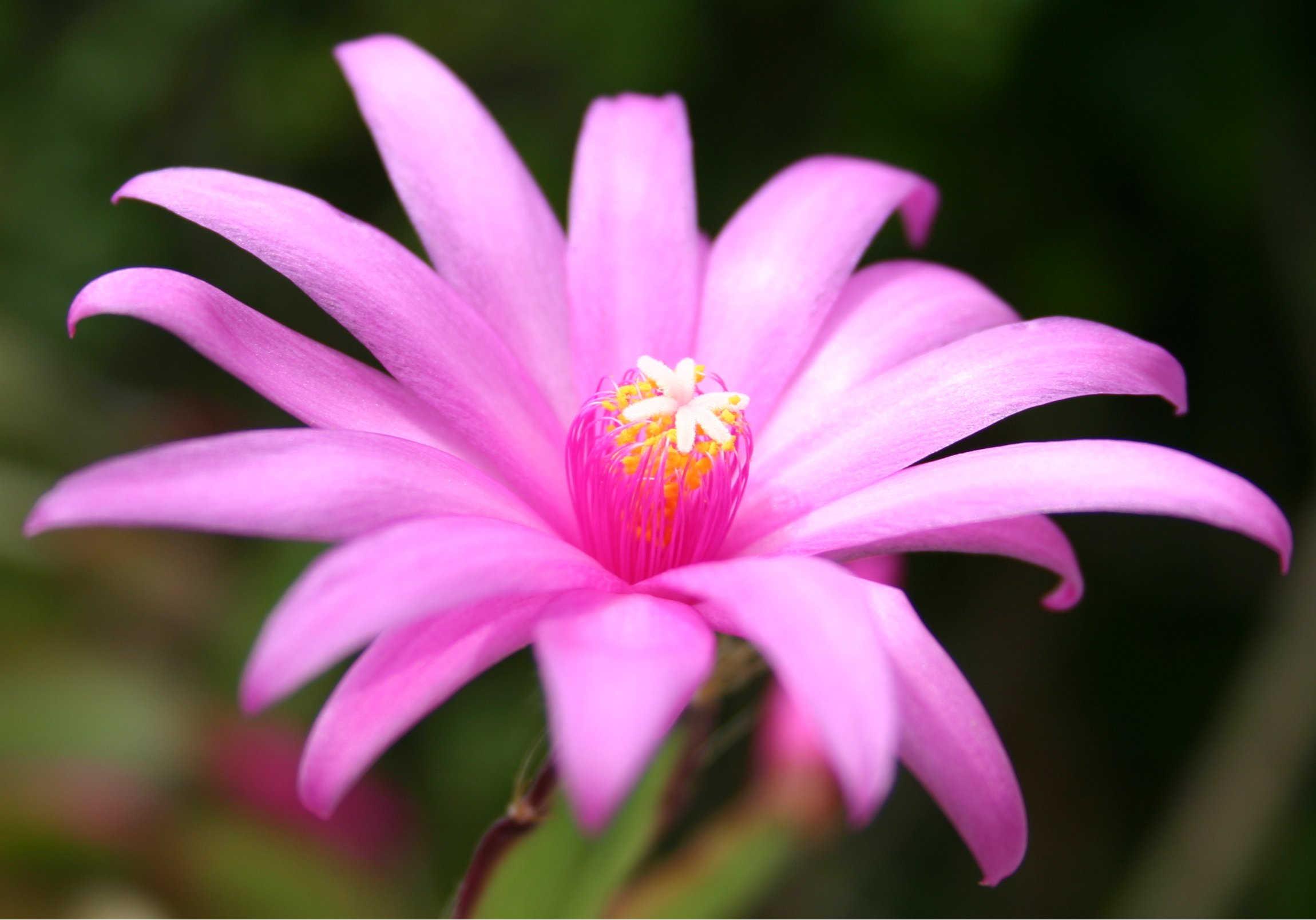 можем красивые цветы фото по одному цветку это