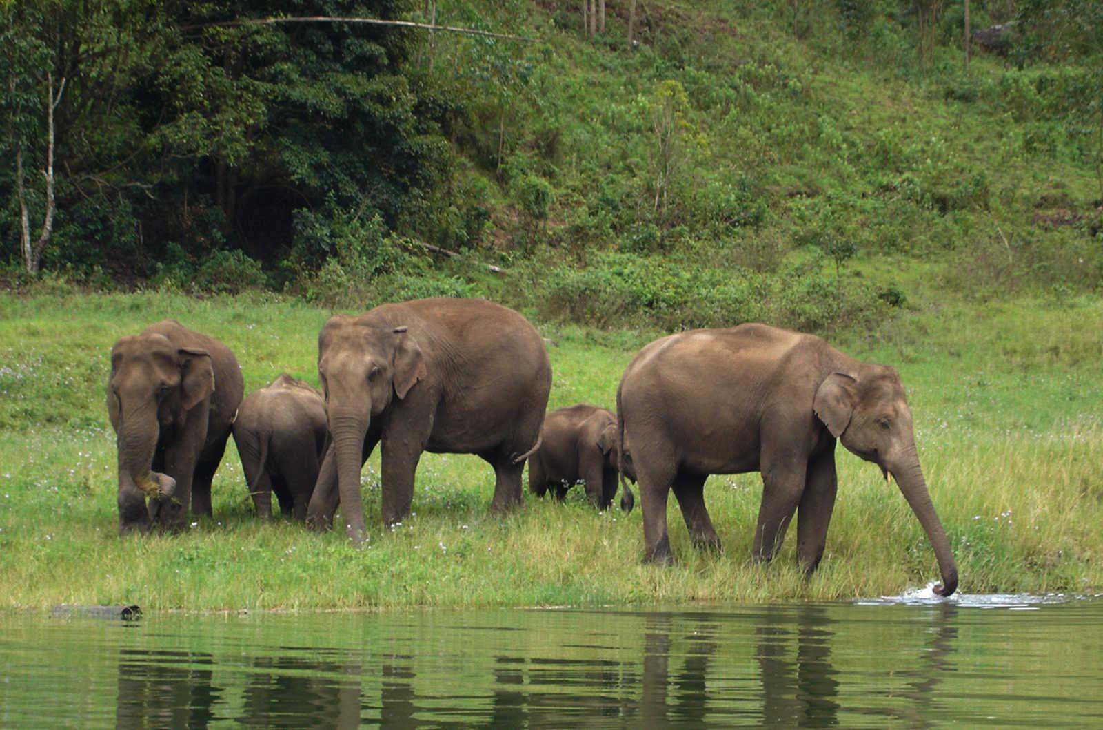 Член слона фотки 23 фотография
