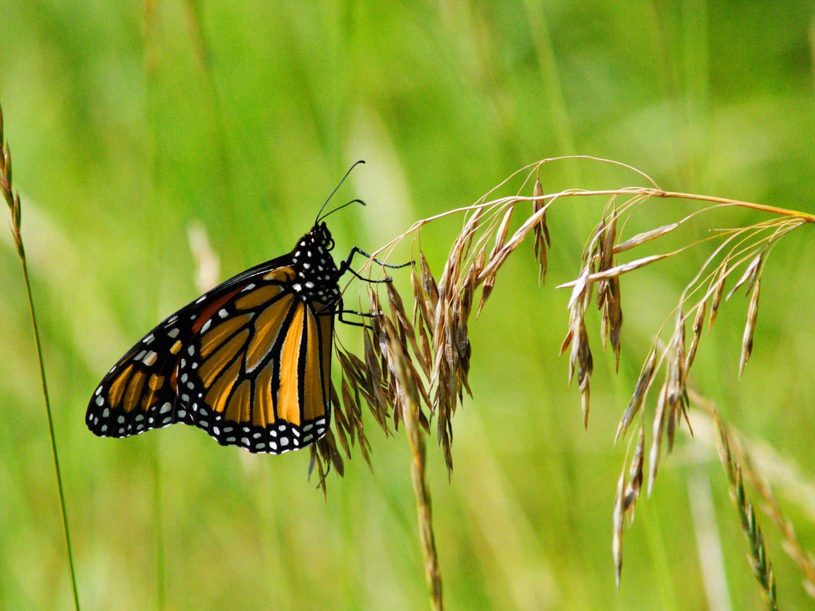 В сексе бабочка это что