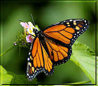Butterflies - God Has Created This